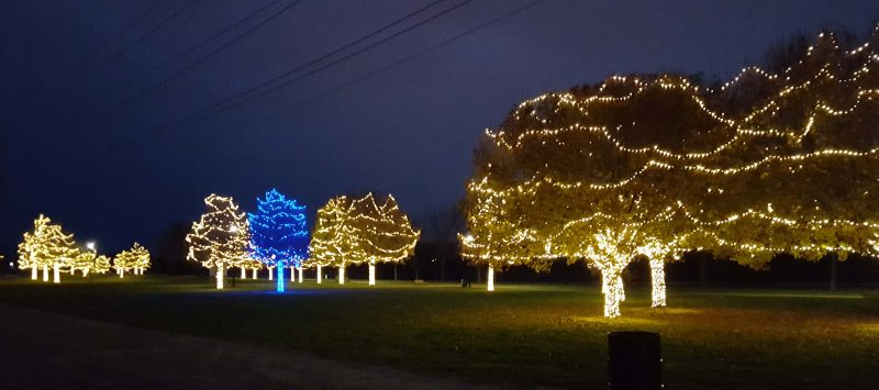 Some of the decorated trees along the Missouri riverfront.