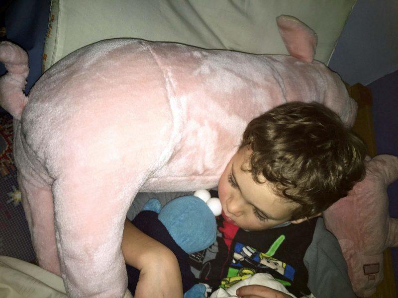teddy-pig